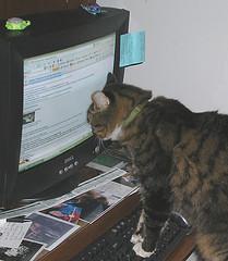 cat-reading-computer.jpg